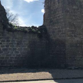 Ciudadanos, satisfecho por la poda del árbol que erosionaba la muralla, pero insta al Ayuntamiento a seguir avanzando en su recuperación