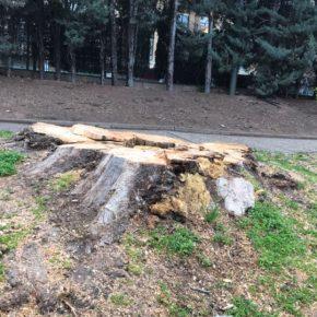 Ciudadanos quiere que Ruiz Tutor comparezca para explicar la tala de árboles en diferentes calles de Logroño