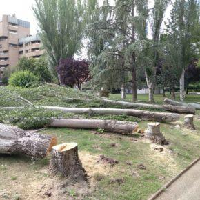 Ciudadanos exige explicaciones a Ruiz Tutor por la tala indiscrimada de los árboles de la Plaza de México